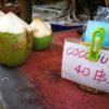 タイ | バンコク | オプショナルツアーの【パンダツアー】でココナッツ農家へ
